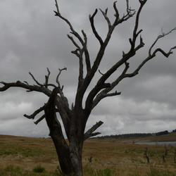 Lake Eucumbene Trees - Homeleigh Bay 2.J