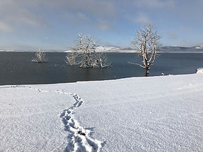 Tracks in the snow - Old Adaminaby (Lake