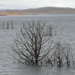 Lake Eucumbene Trees - winter.JPG