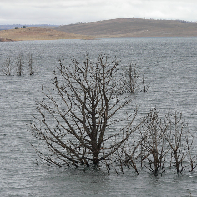 Lake Eucumbene Trees - winter.JPG