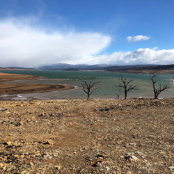 Lake Eucumbene Trees - Yens Bay in winte