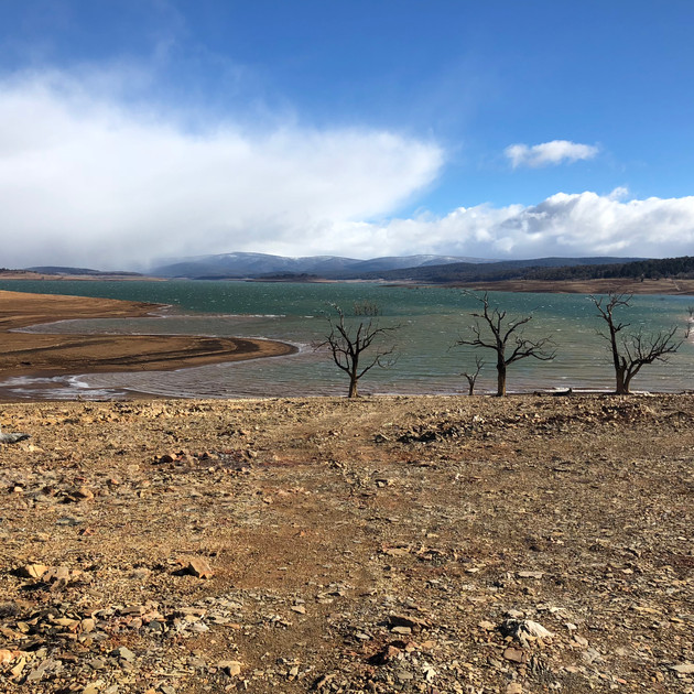 Lake Eucumbene Trees - Yens Bay in winte