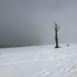 50% tree in snow - Lake Eucumbene.JPG