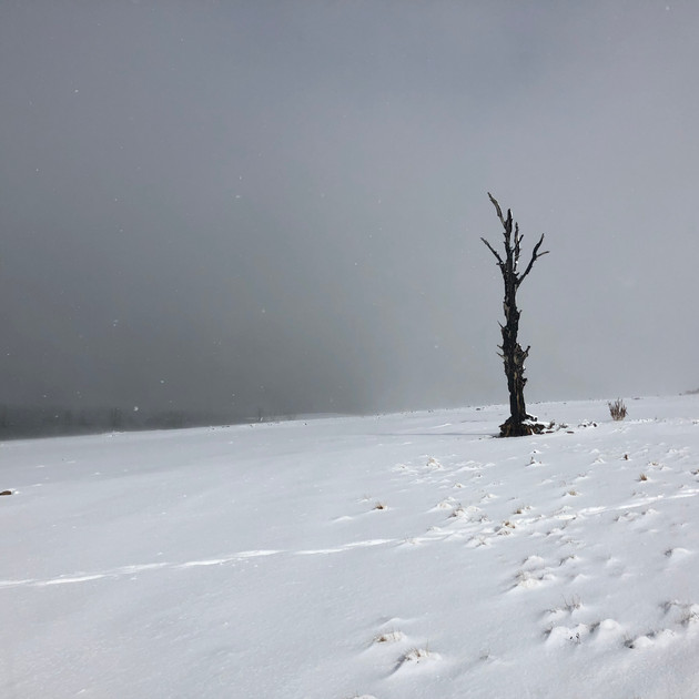 50% tree in snow - Lake Eucumbene.JPG
