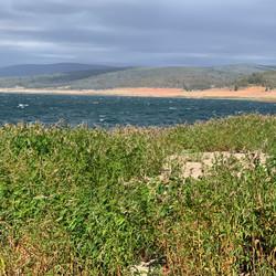 Windy day at Trout Island - Lake Eucumbe