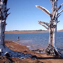 Lake Eucumbene Trees - 50% trees snwfall