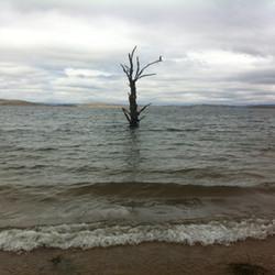 Lake Eucumbne Trees - 50% tree 2.JPG