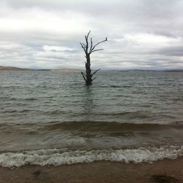 Lake Eucumbne Trees - 50% tree 2.JPG