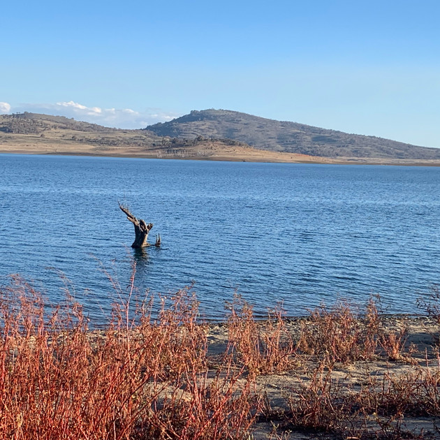 Lake Eucumbene Tree - April 2019.jpg