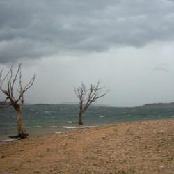 Lake Eucumbene Trees - incoming storm.JP