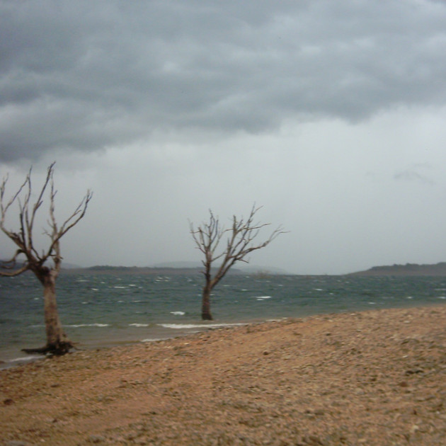 Lake Eucumbene Trees - incoming storm.JP