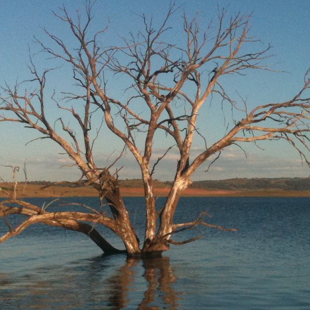 Lake Eucumbene Trees - Observation Point