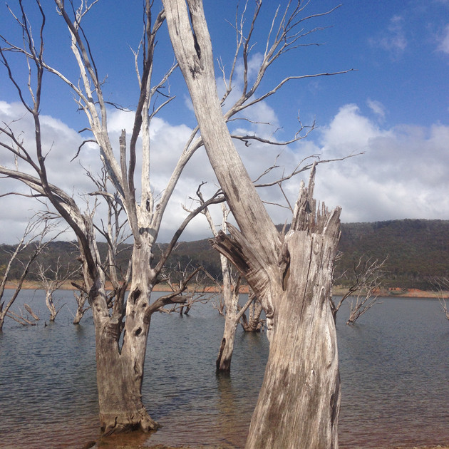 Lake Eucumbene Trees - Anglers Reach 1.J