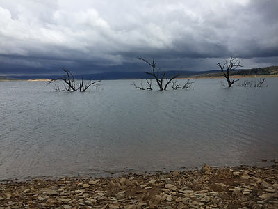 Lake Eucumbene trees in Yens Bay - Jan 2016