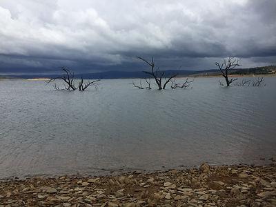 Lake Eucumbene trees in Yens Bay - Jan 2016