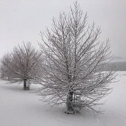 Very heavy snowfall at Old Adaminaby (La