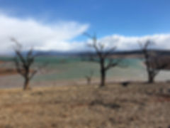 Lake Eucumbene trees in Yens Bay - Jul 18