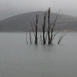 Standing tall - Lake Eucumbene Tree.JPG