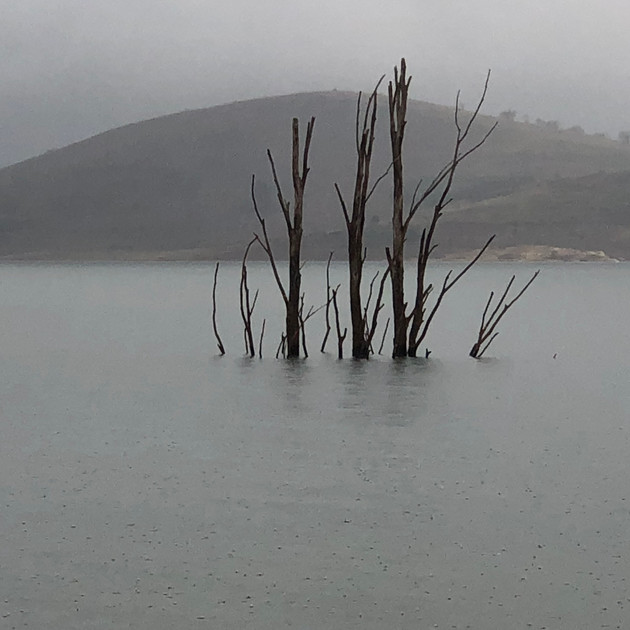 Standing tall - Lake Eucumbene Tree.JPG