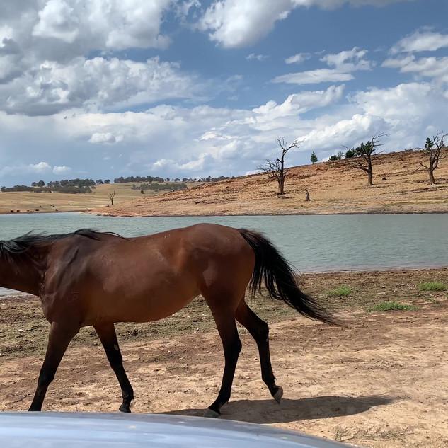 Video - Lake Eucumbene horse.MOV
