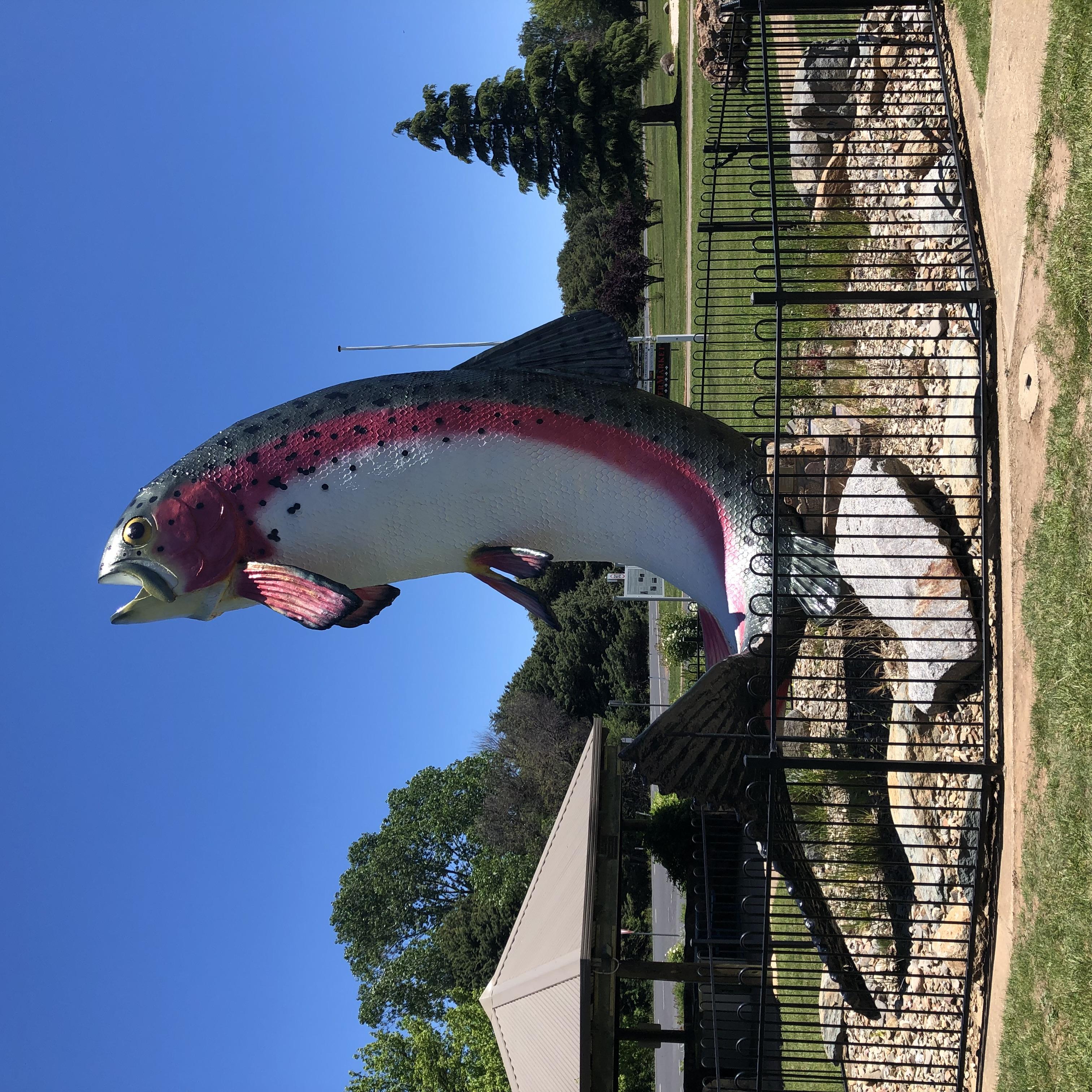 The Worlds Largest Trout at Adaminaby -