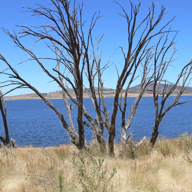Lake Eucumbene Trees - summer.JPG