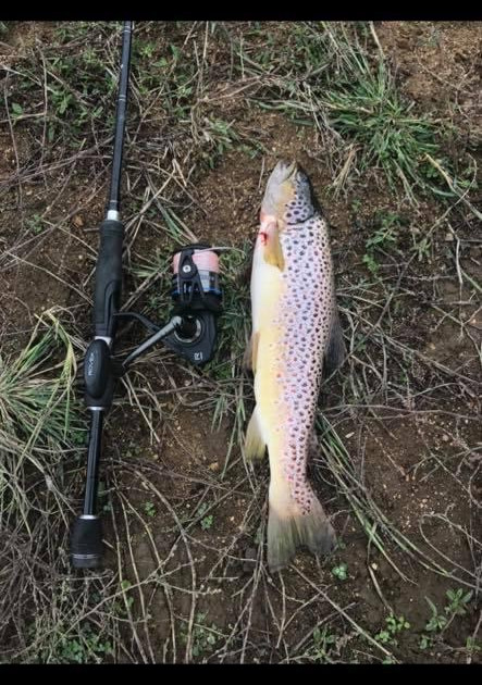 Edgar Reitz - Rainbow Trout - Lake Eucum