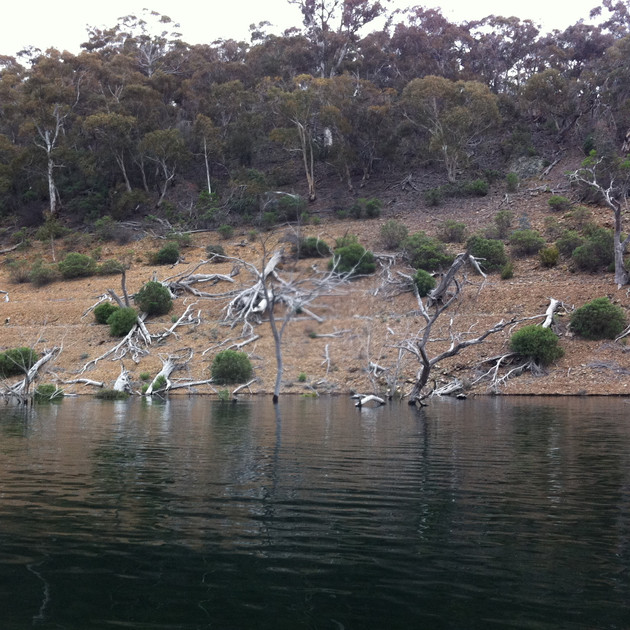 Lake Eucumbene Trees - near Eucumbene Da