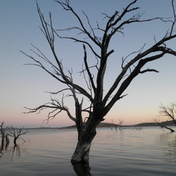 Trees at Observation Point - Lake Eucumb