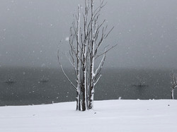 Trees in heavy snow - Lake Eucumbene