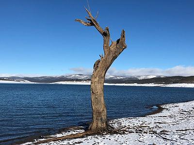 The tree at Trout Island - Lake Eucumben