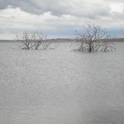 Lake Eucumbene Trees - Old Adaminaby.JPG
