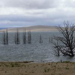 Lake Eucumbene Trees - Storm.JPG