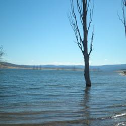 Lake Eucumbene Trees - poplars.JPG