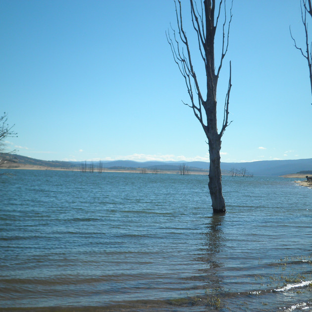 Lake Eucumbene Trees - poplars.JPG