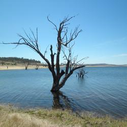 lake Eucumbene Trees - Observation Point