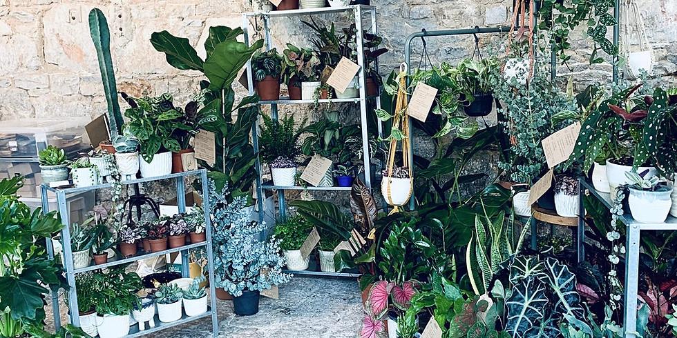 Pop Up Shop | Nook Houseplants