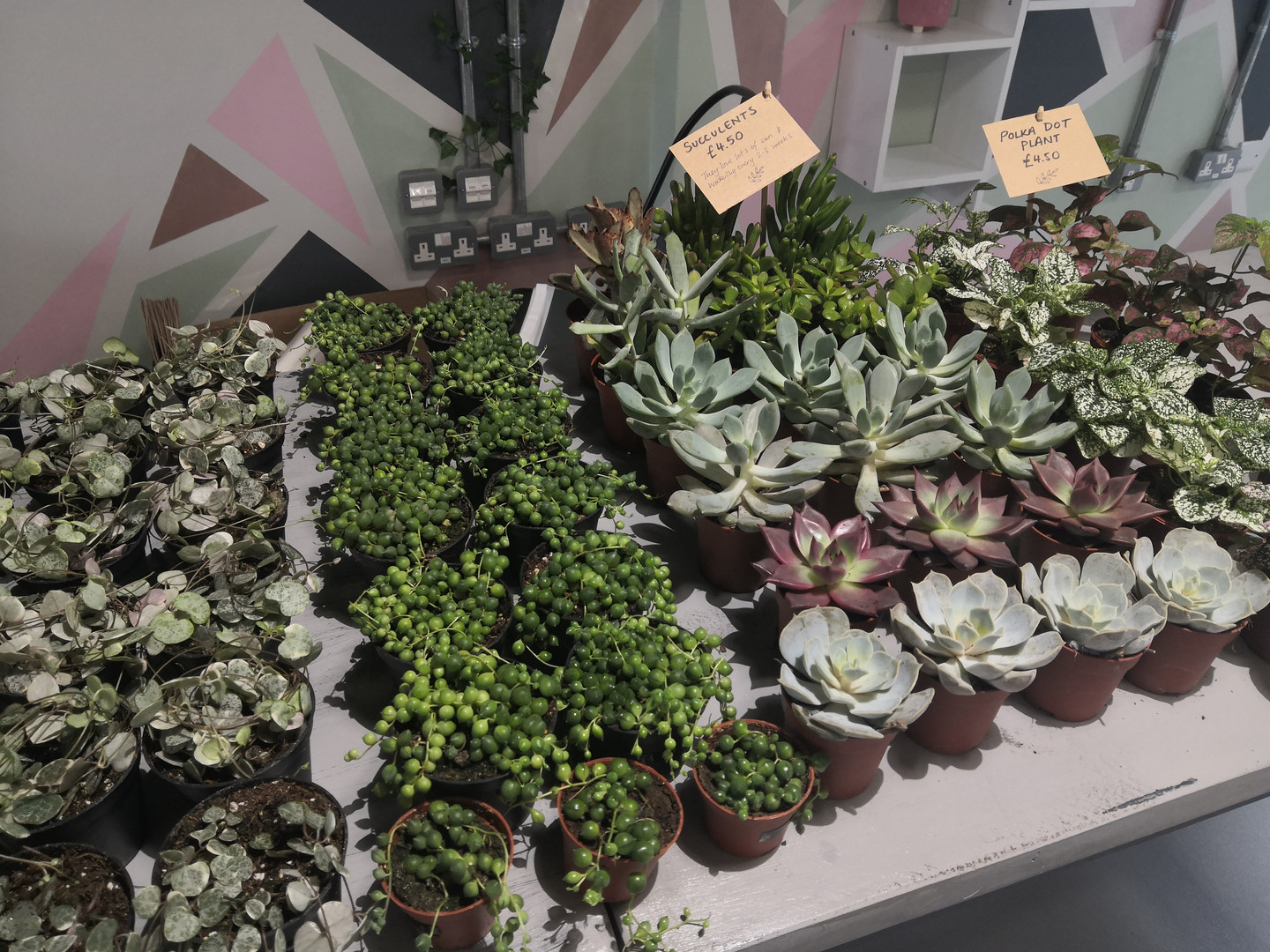 Pop Up Shop with Nook Houseplant