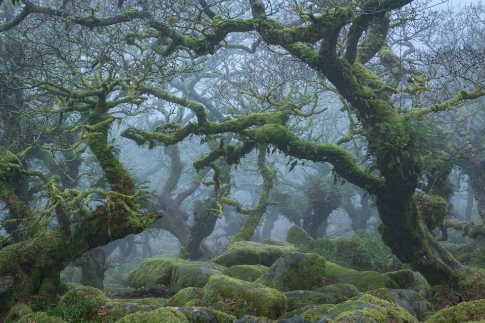 Picture of murky woods