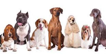 bunch of dogs 2.jpg