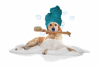 dog bathwturban.png