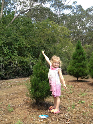 little girl at christmas tree farm