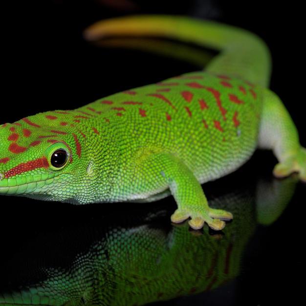 reptiles for sale