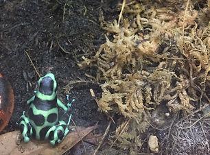 green n blacks.jpg