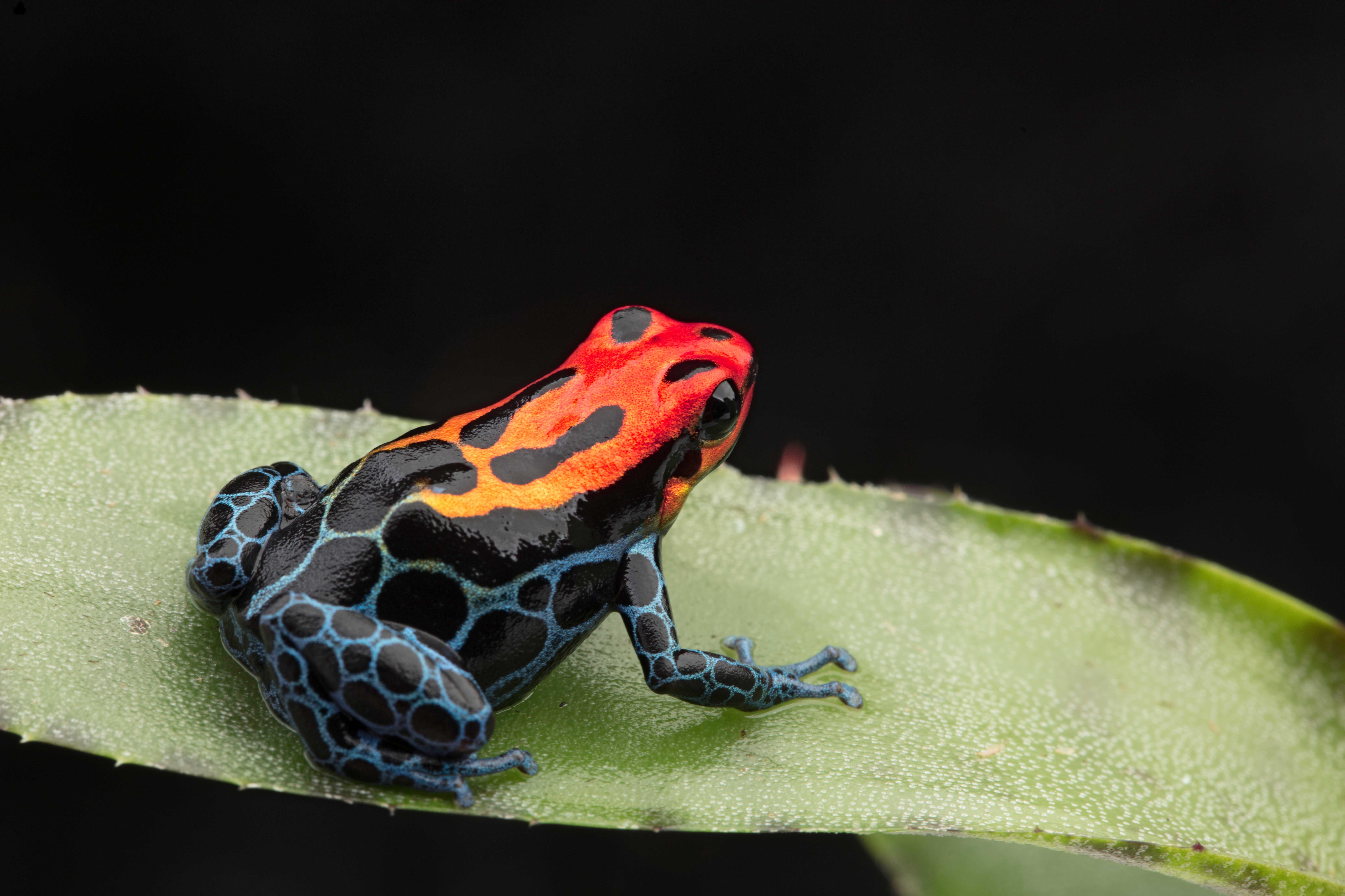 reptile/dart frog online store