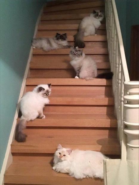Hilléa, Ivy, Eden, Fleur et Charlie