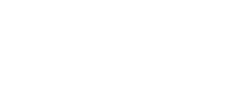 white web glasses.png