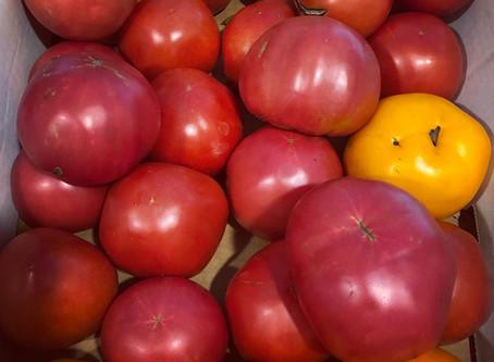 Tomatofest!!!