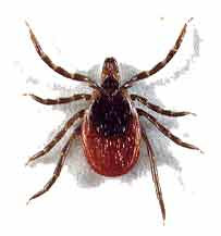 Chinese Medicine for Treating Lyme Disease
