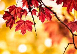 leaves.jpeg